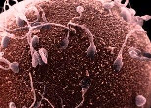 Tüp Bebek Tedavisinde 3.Adım Döllenme-Birleşme Safhası