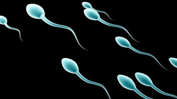 Tüp Bebek Tedavisinde Spermin Önemi